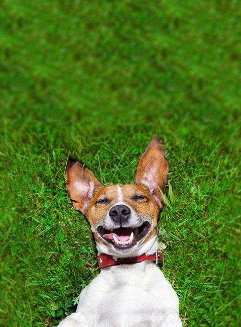 Die erste isolierte, wärmegedämmte Hundetüre / Katzentüre die auch Passivhaus geeignet ist.